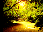The Quiet Path by TheStormUnleashed