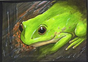AcEO 041: green+frog by The-Purring-Teapot