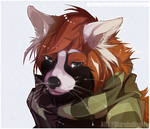 Com for Russian-red-panda by ShirubaHoshi