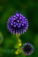 Unnatural Flower by Cailler64