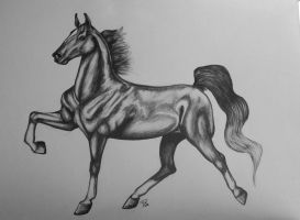 Saddlebred slow gait by Comix-Chick