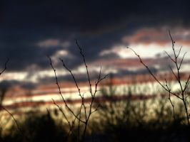 The gloaming IV by suffer1