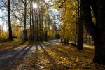 Autumn leaves by BIREL