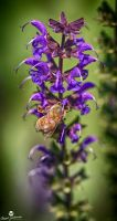 Going For the Nectar HDR by mjohanson