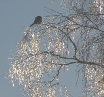 The Bird in the GlassTree 2 by Kattvinge