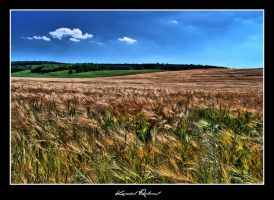 Field by zozzy1980