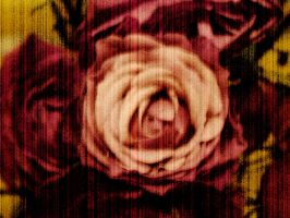 rose by Photogenetic