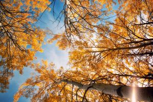 Golden Fall by Seline-W