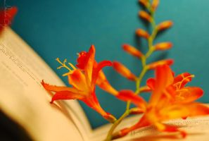 The book and crocosmia.. by TheRedGirl