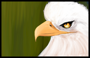 The Eagle by andys184