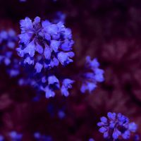 night flowers by peregrin71