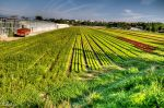 Fields in Gaillard by Rikitza