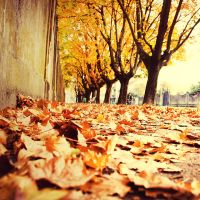 The Same by nairafee