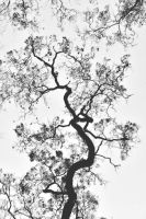 Branches by Edmonam