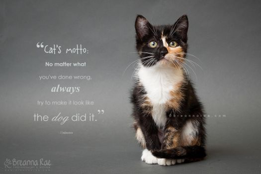 A Cat's Motto by breanna-rae