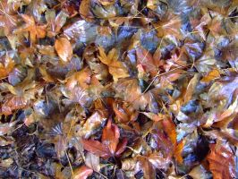 Wet Leaves by dazzle-textures