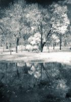 Autumn in Infrared by env1ro