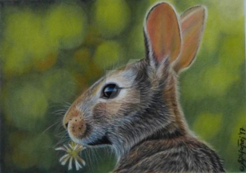 Pastel painting of a young hare by theArtofsilviafrei