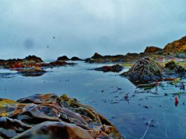 Through the Tide Pools by NottheVoreFreak