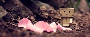 danbo3 by baybeehh