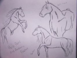 horse sketches by BunnyKackles