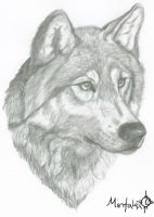 The Wolf's Portrait by Mintakawolven