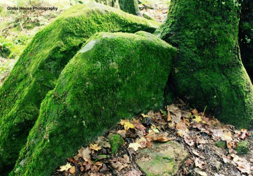 Exhalation of Moss by GlassHouse-1