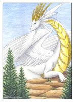 White Dragon by iduck