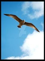 Flying by tpphotography
