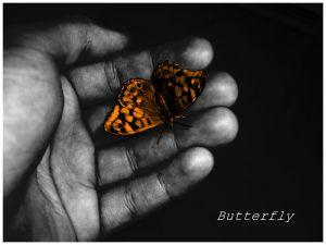 Butterfly by JGamito - Kelebek Severler ��in ;)