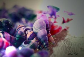 colourful small shells by Zlata-Petal