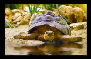 At the beach by Nataly1st