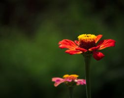 Red flower by sztewe