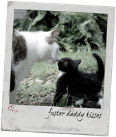 Foster daddy kisses by sydneypetography