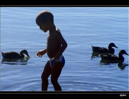 young man and the sea by daphnis