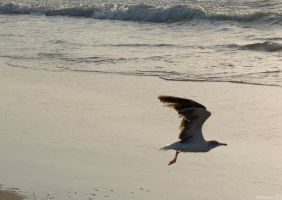 Seagull by GreenL15