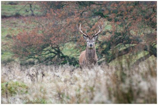 Stag 118-01-13 by Prince-Photography