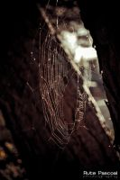 Spider Web by RutePascoal
