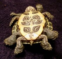 8 Legged Freak Turtle Gaff 3 by DETHCHEEZ