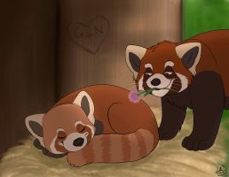Red Pandas by Miss-Melis