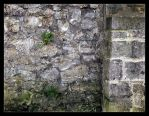 the wall by Ingelore