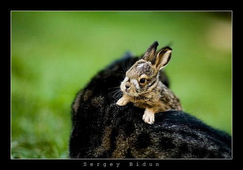 Rabbit and Cat... by sergey1984