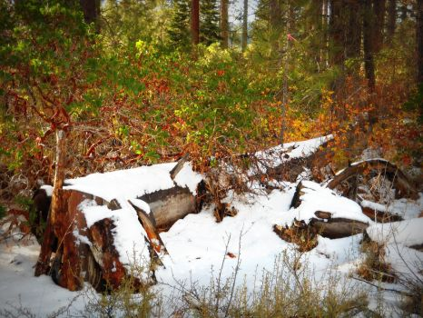Snow Covered Autumn Colors by photographsoflife