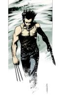 Wolvie - Colored by Botonet
