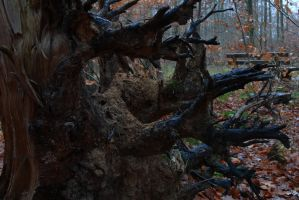 Rotten Trees No. 6a by Amaries-stock