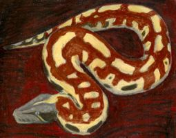 Blood Python by starglo21