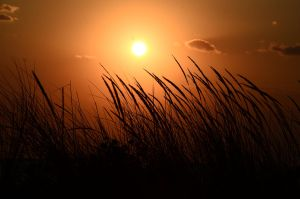 Reeds by the sea , summer sunset 2 by AmmarkoV1