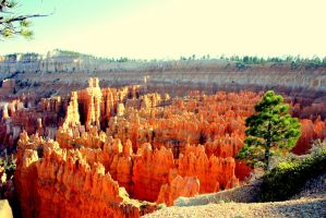 Bryce Canyon from Above by Angus4greenie