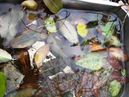 submerged leaves by pretentioustwit
