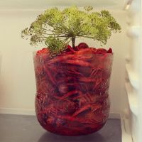 There is crayfish in the jar by attomanen